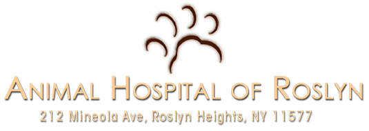 Animal Hospital of Roslyn